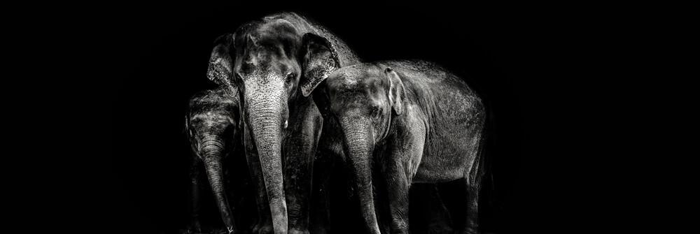 Papier Peint Panoramique éléphants