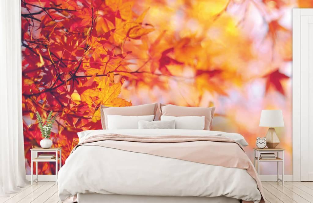 Feuilles - Feuilles d'automne - Chambre à coucher 1