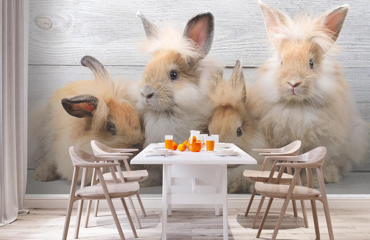 Wallpaper Petits lapins 3