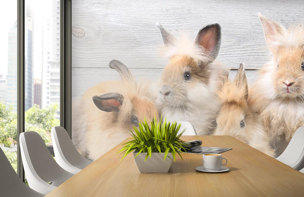 Wallpaper Petits lapins 6