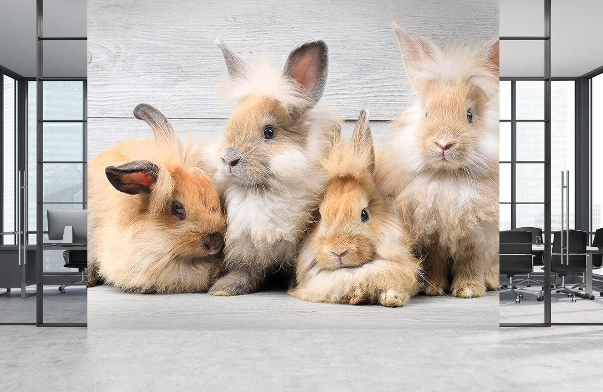 Wallpaper Petits lapins 2