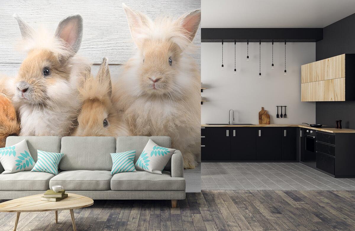 Wallpaper Petits lapins 8