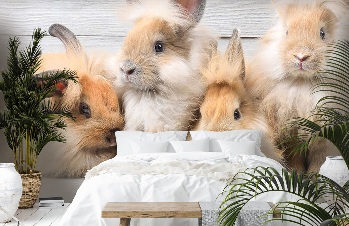 Wallpaper Petits lapins 5