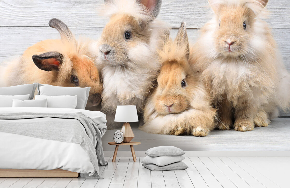 Wallpaper Petits lapins 9