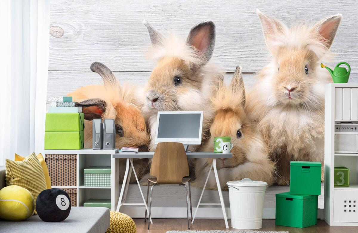 Wallpaper Petits lapins 4