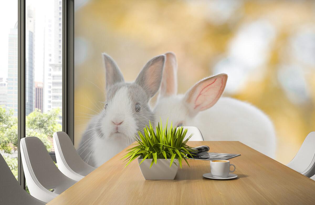 Wallpaper Gros plan sur des lapins 6