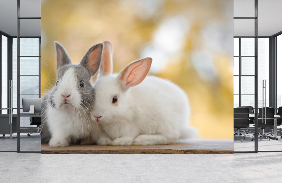 Wallpaper Gros plan sur des lapins 2