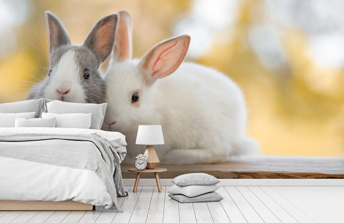Wallpaper Gros plan sur des lapins 5