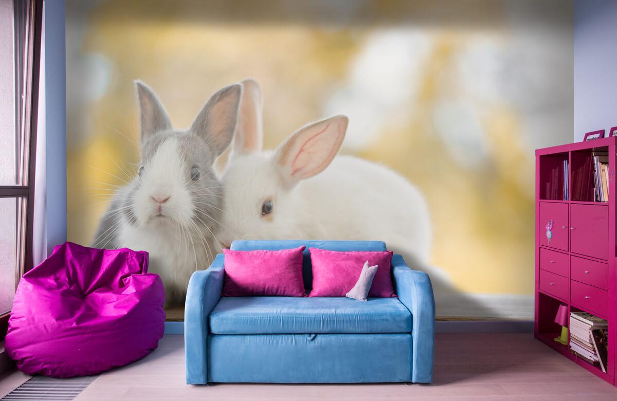 Wallpaper Gros plan sur des lapins 1