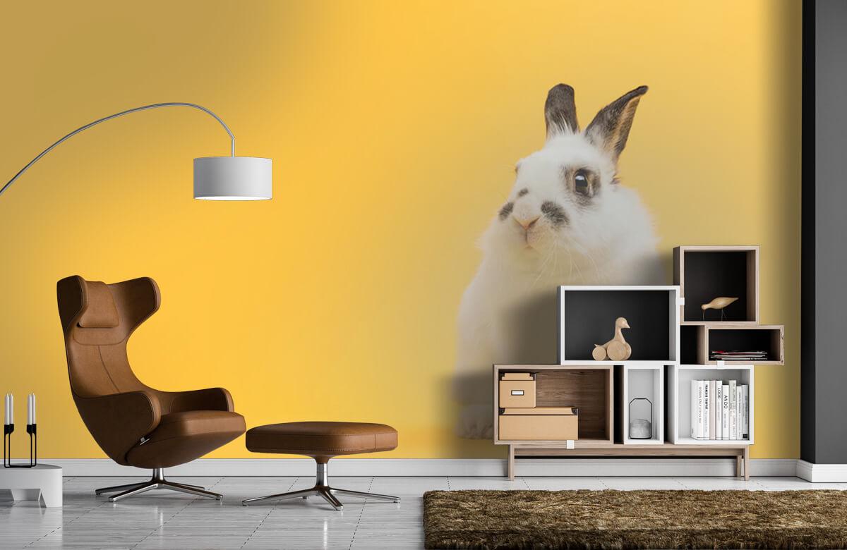 Wallpaper Pose de lapin 9