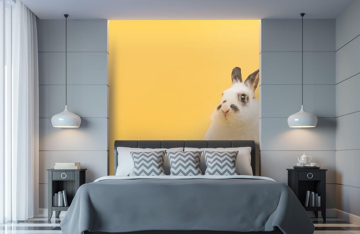Wallpaper Pose de lapin 11