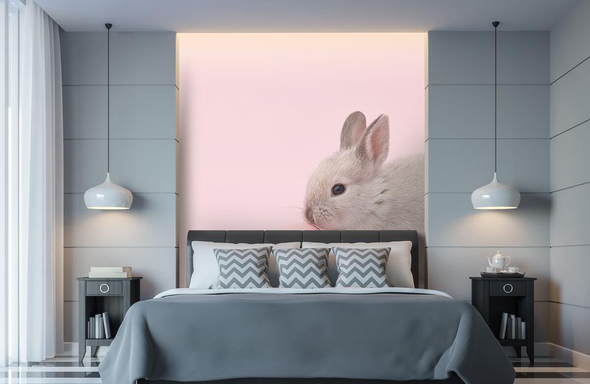 Wallpaper Lapin avec un œuf 11