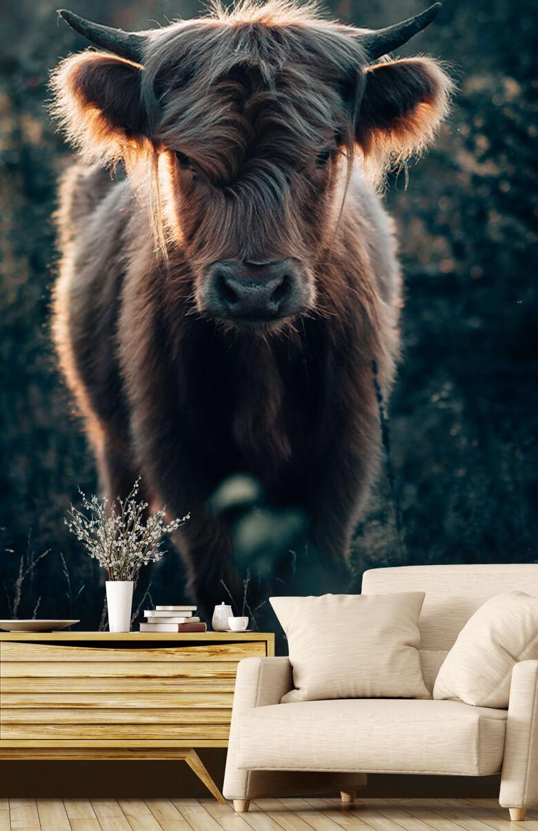 animaux Jeune montagnard écossais 1