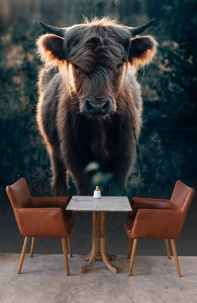 animaux Jeune montagnard écossais 2