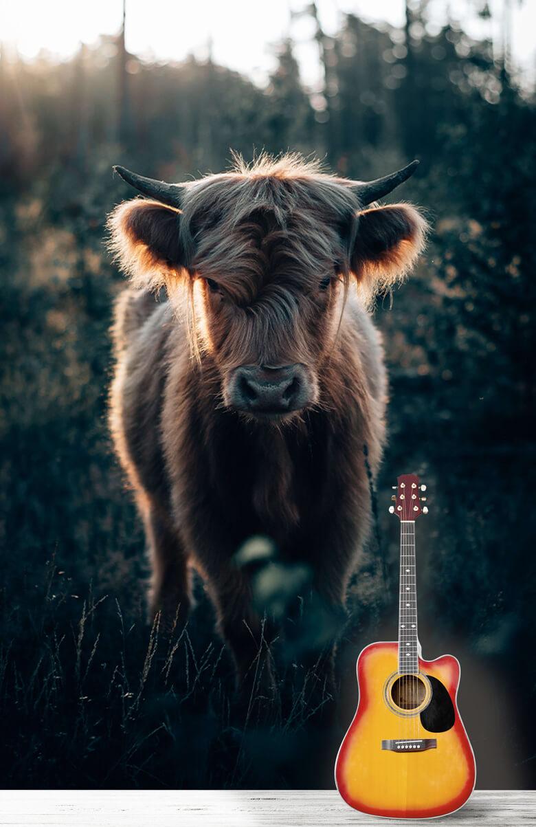 animaux Jeune montagnard écossais 5