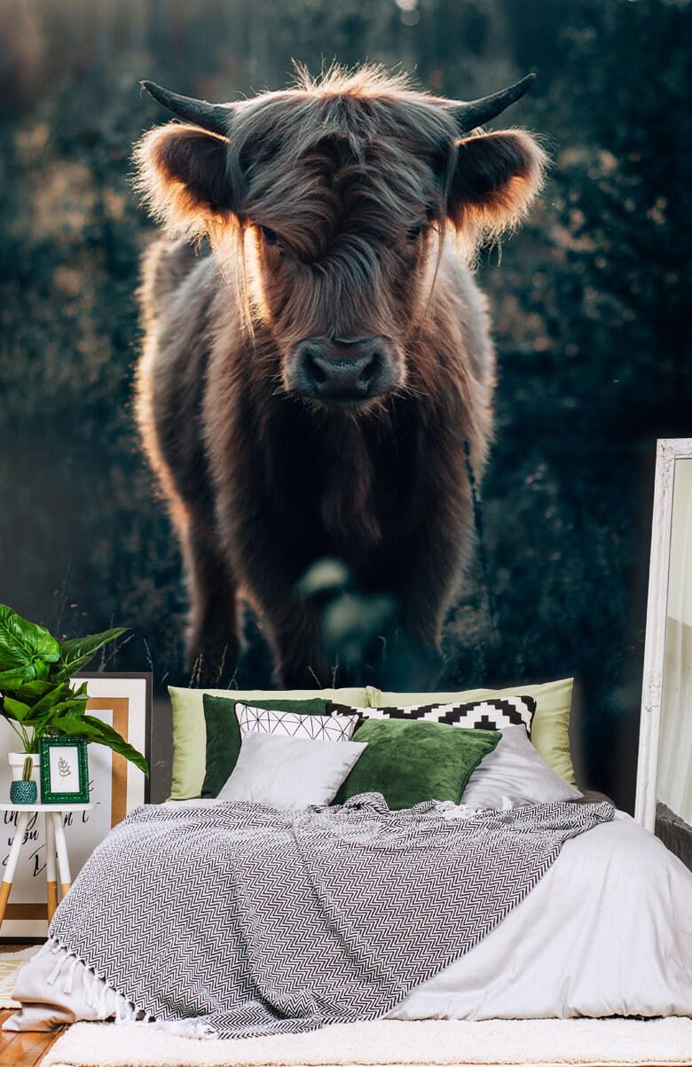 animaux Jeune montagnard écossais 3