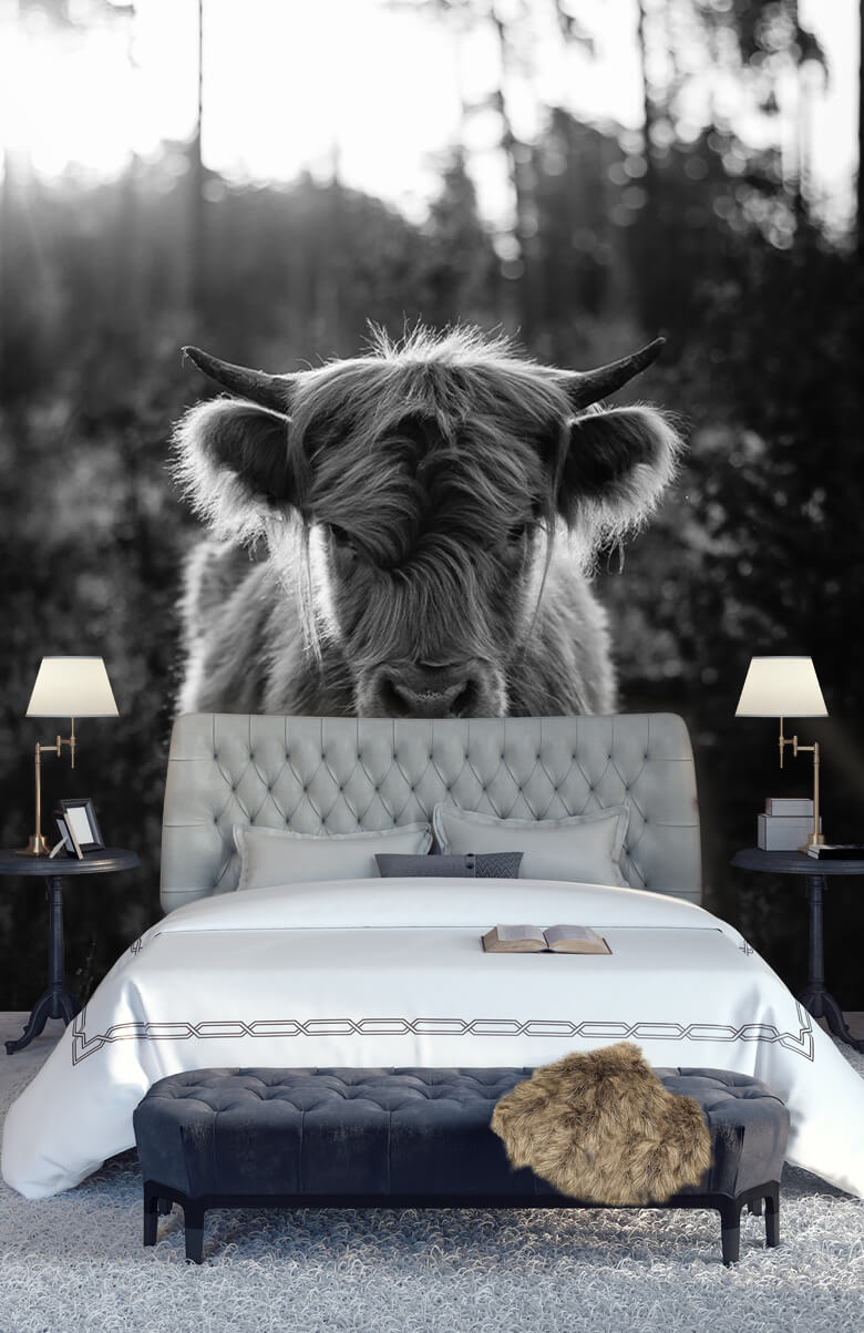 animaux Jeune montagnard écossais 15