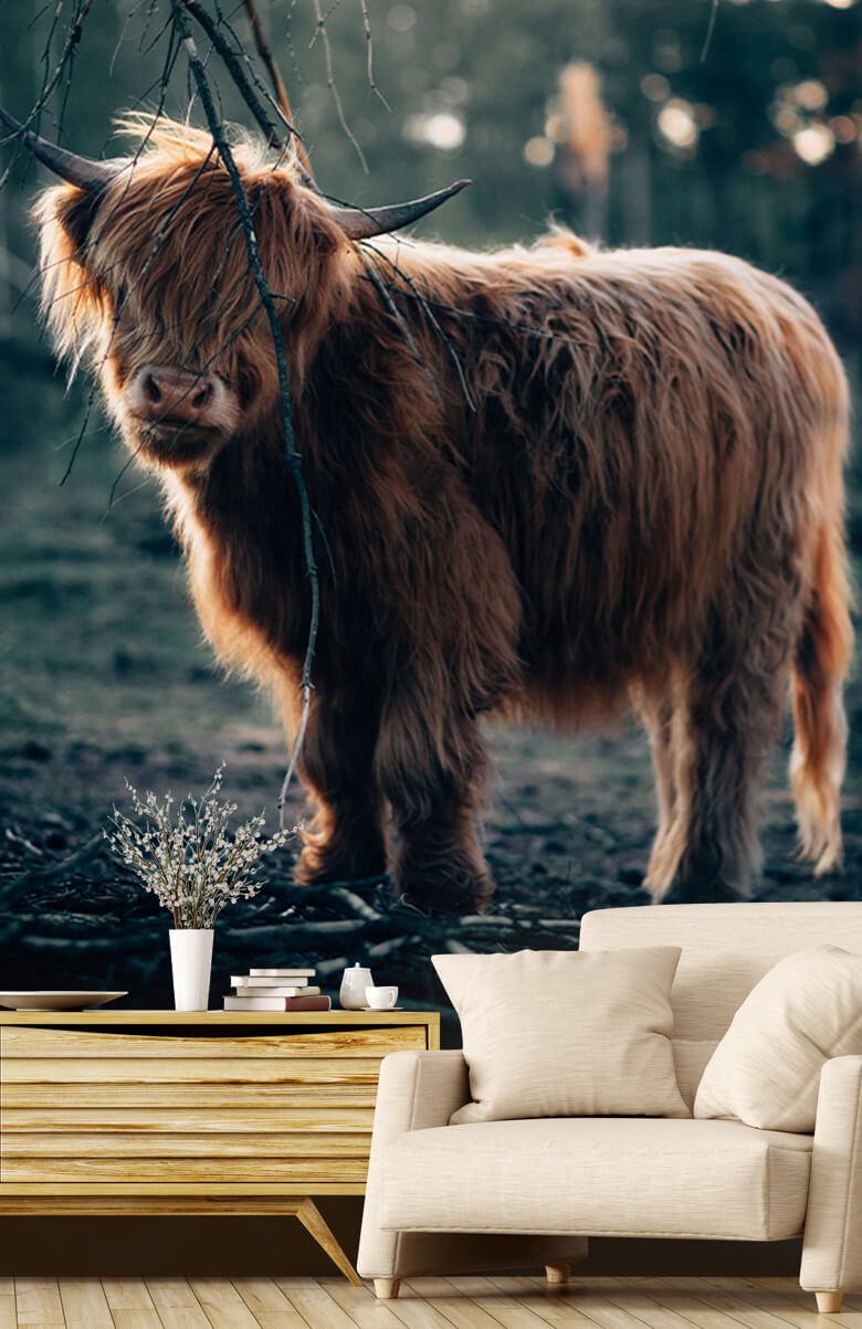 animaux Highlander écossais à l'orée des bois 1