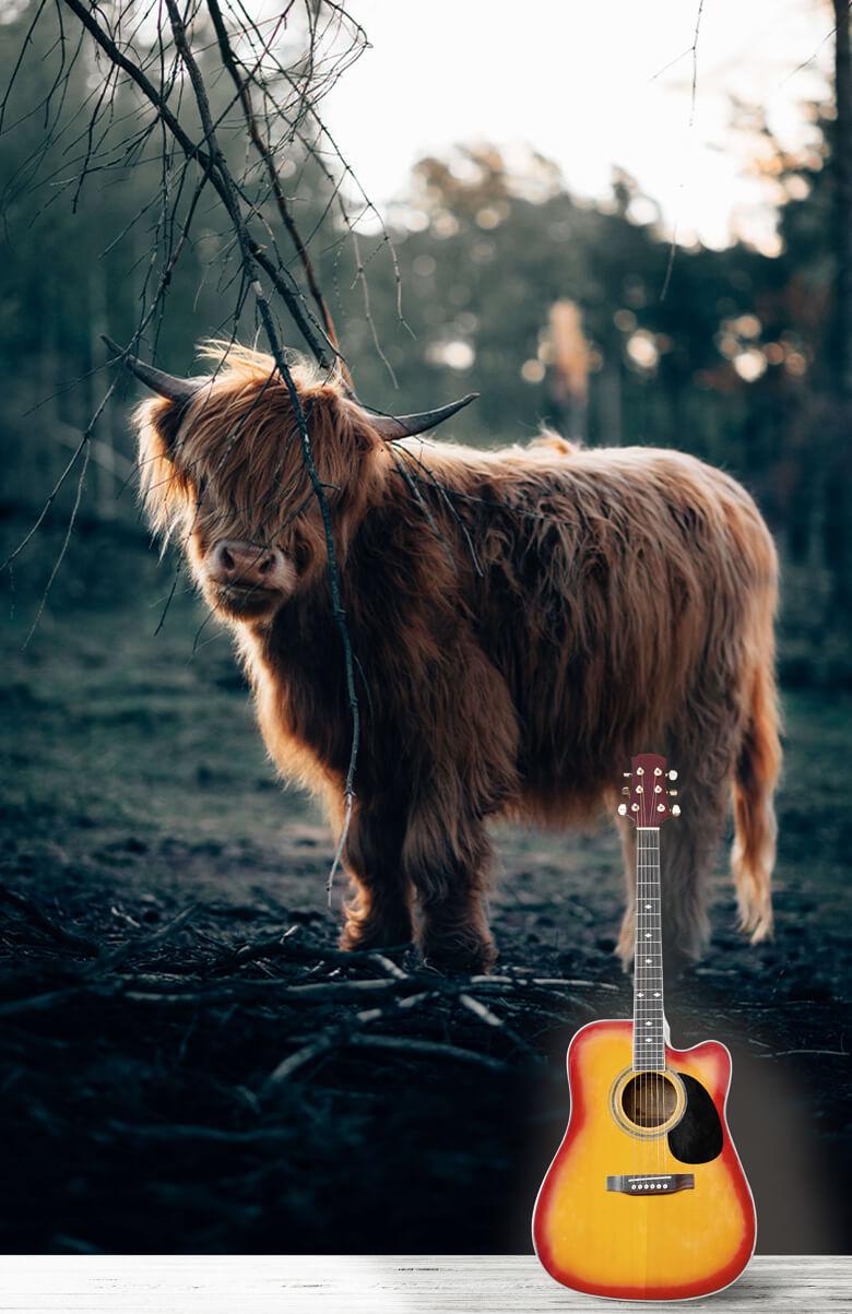 animaux Highlander écossais à l'orée des bois 8
