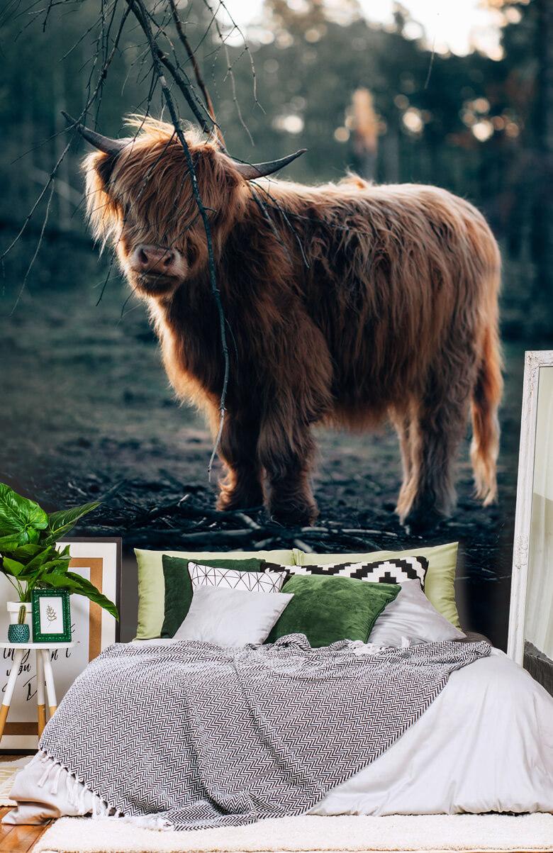 animaux Highlander écossais à l'orée des bois 7