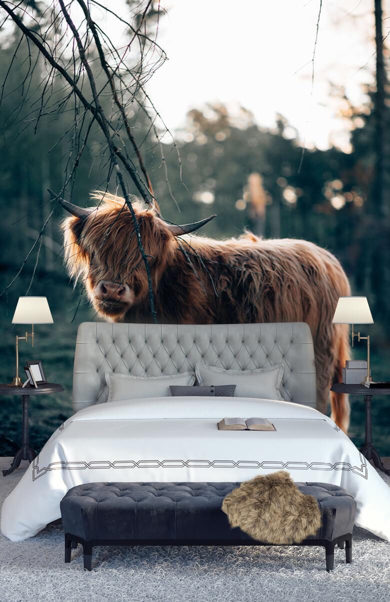 animaux Highlander écossais à l'orée des bois 13