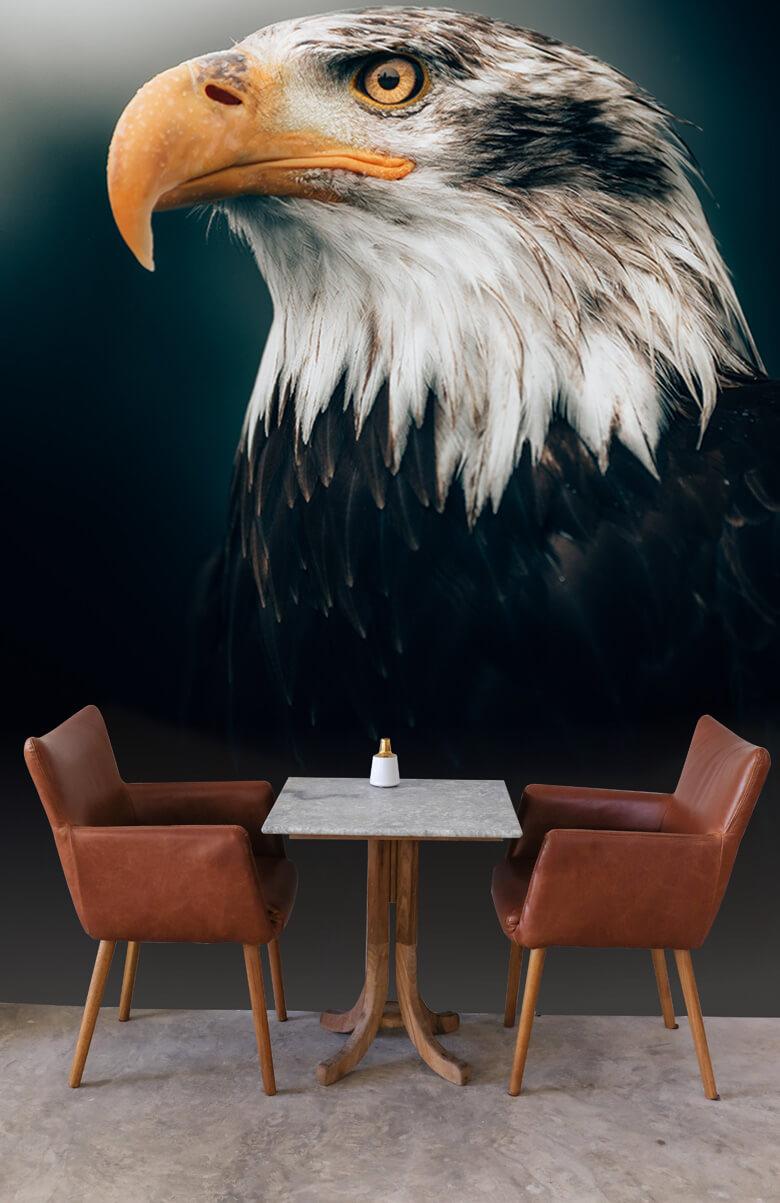 animaux Gros plan sur l'aigle marin 1