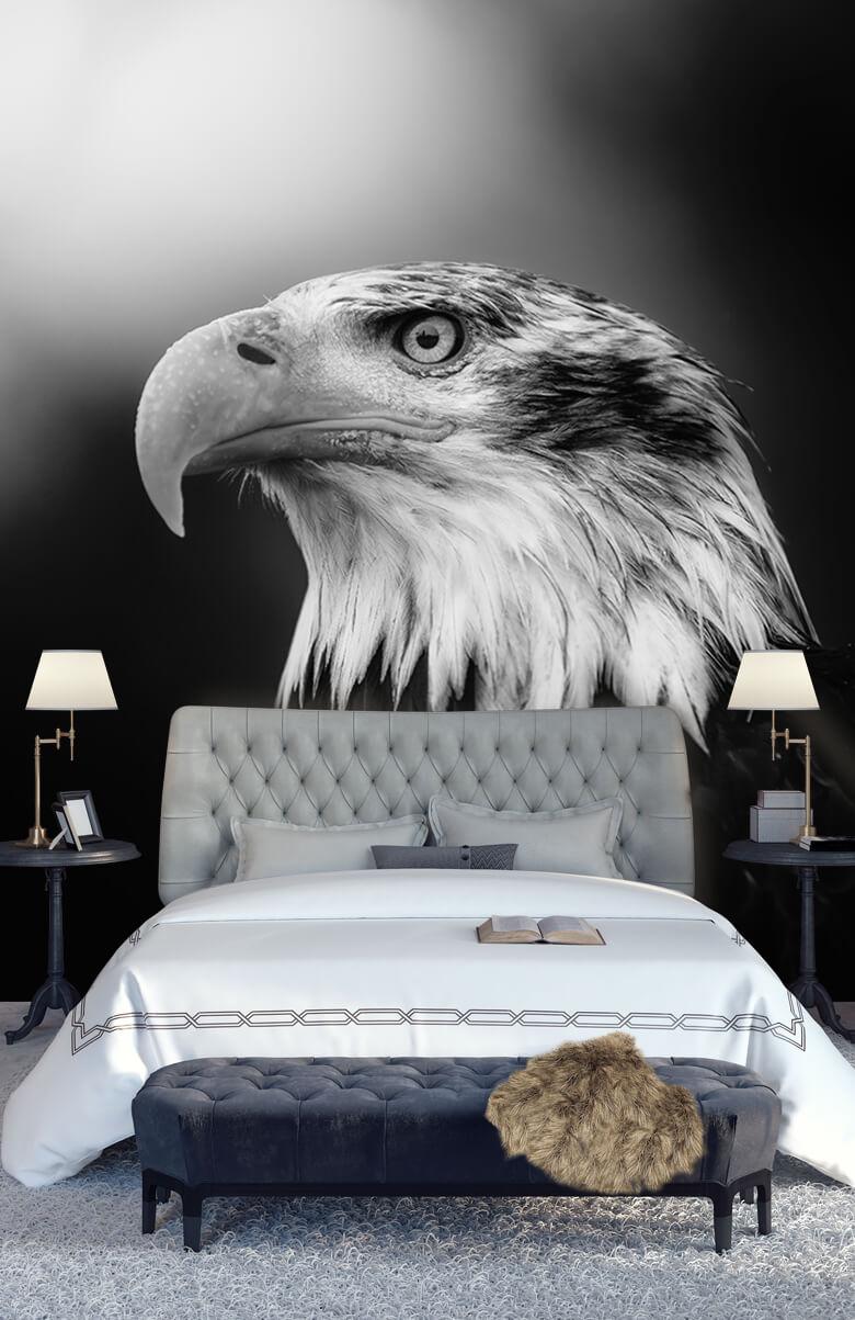 animaux Gros plan sur l'aigle marin 11