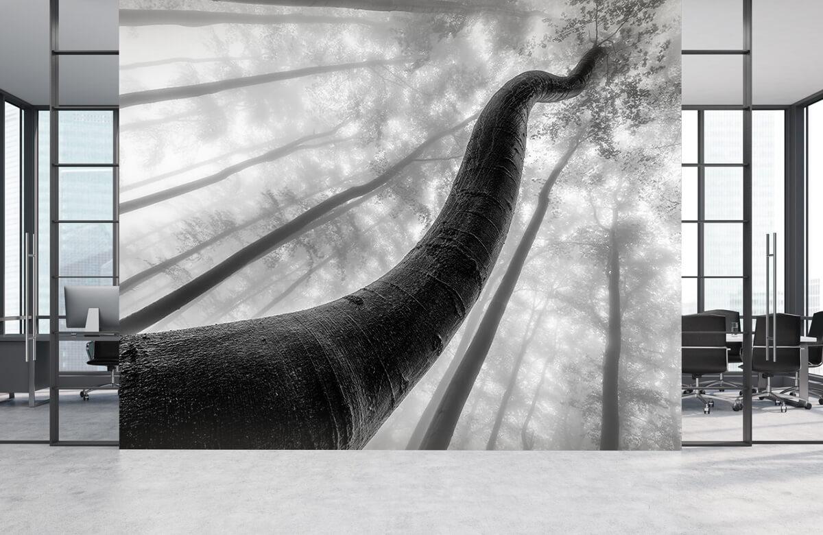 Tree shapes 5