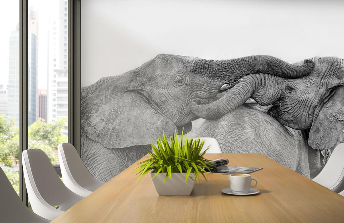Elephant Playing 3