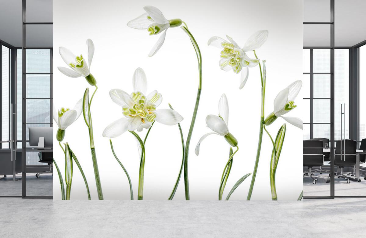 Still-life Spring Snowdrops 6