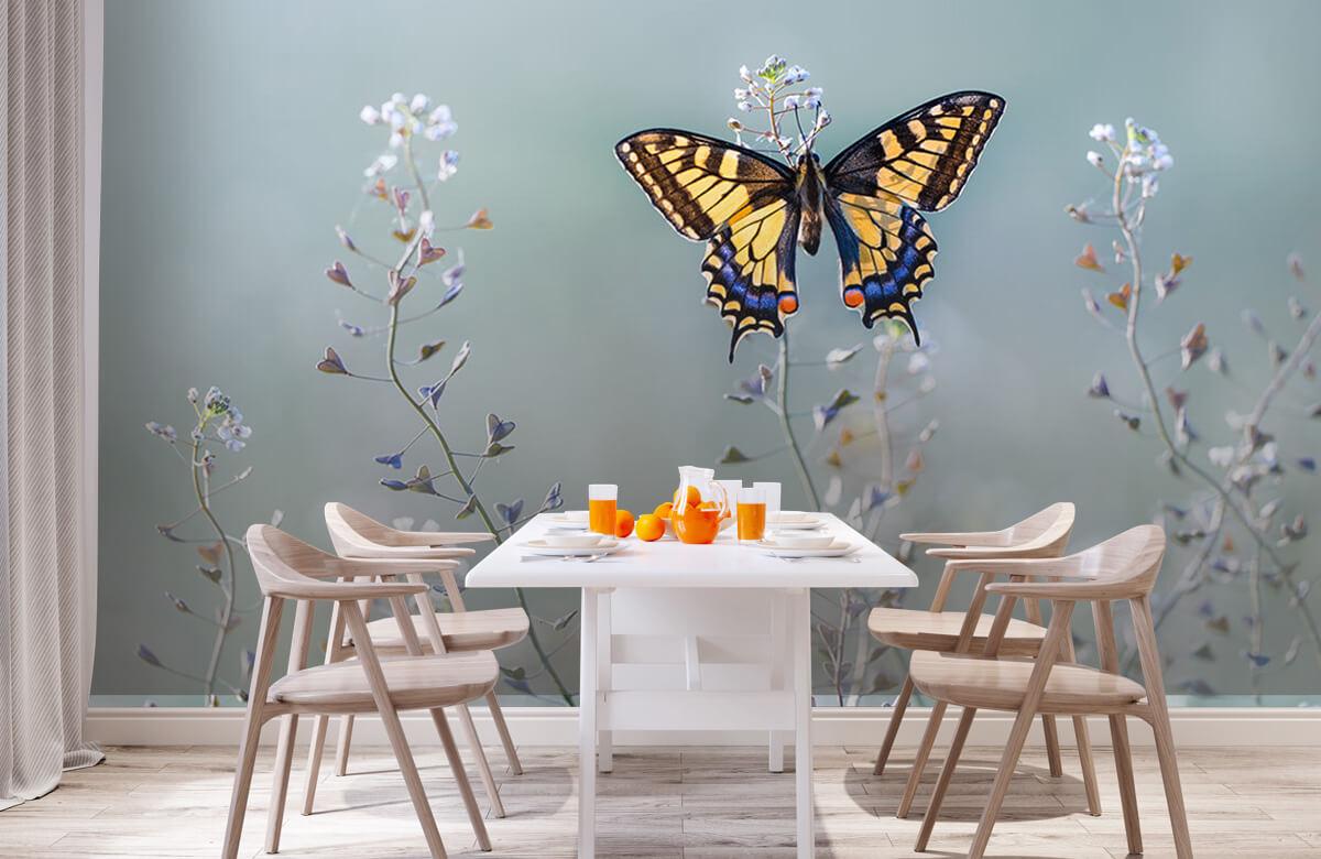 Macro Swallowtail beauty 2