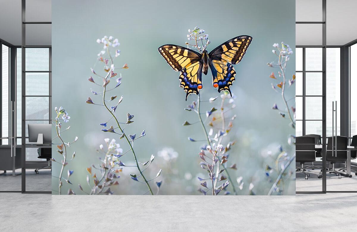 Macro Swallowtail beauty 6