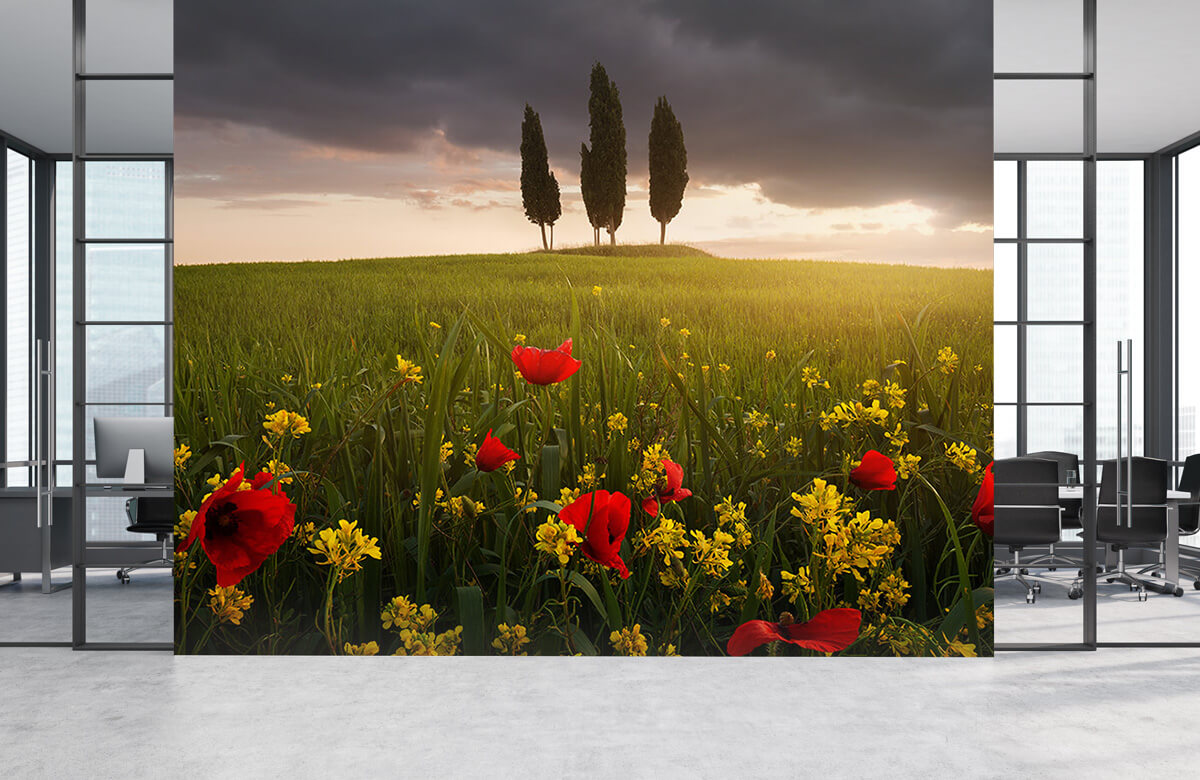 Landscape Blooming Tuscany 6