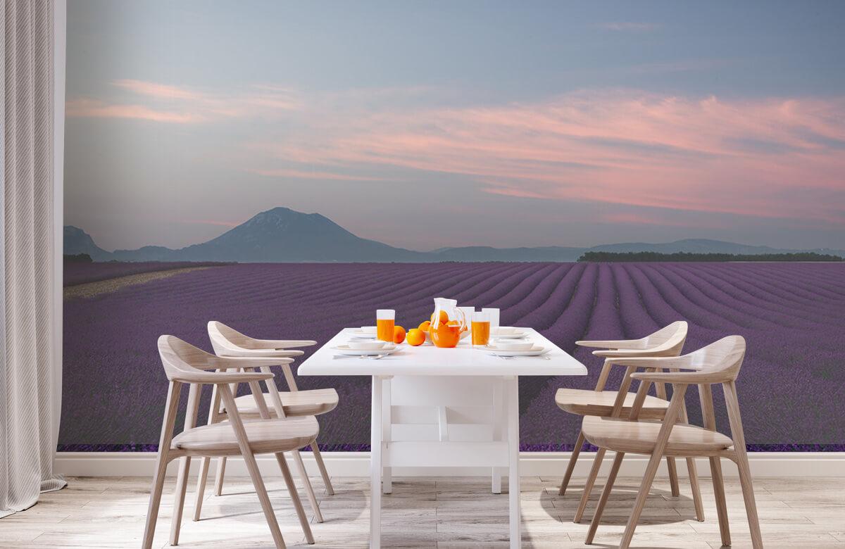 Landscape Lavender field 3