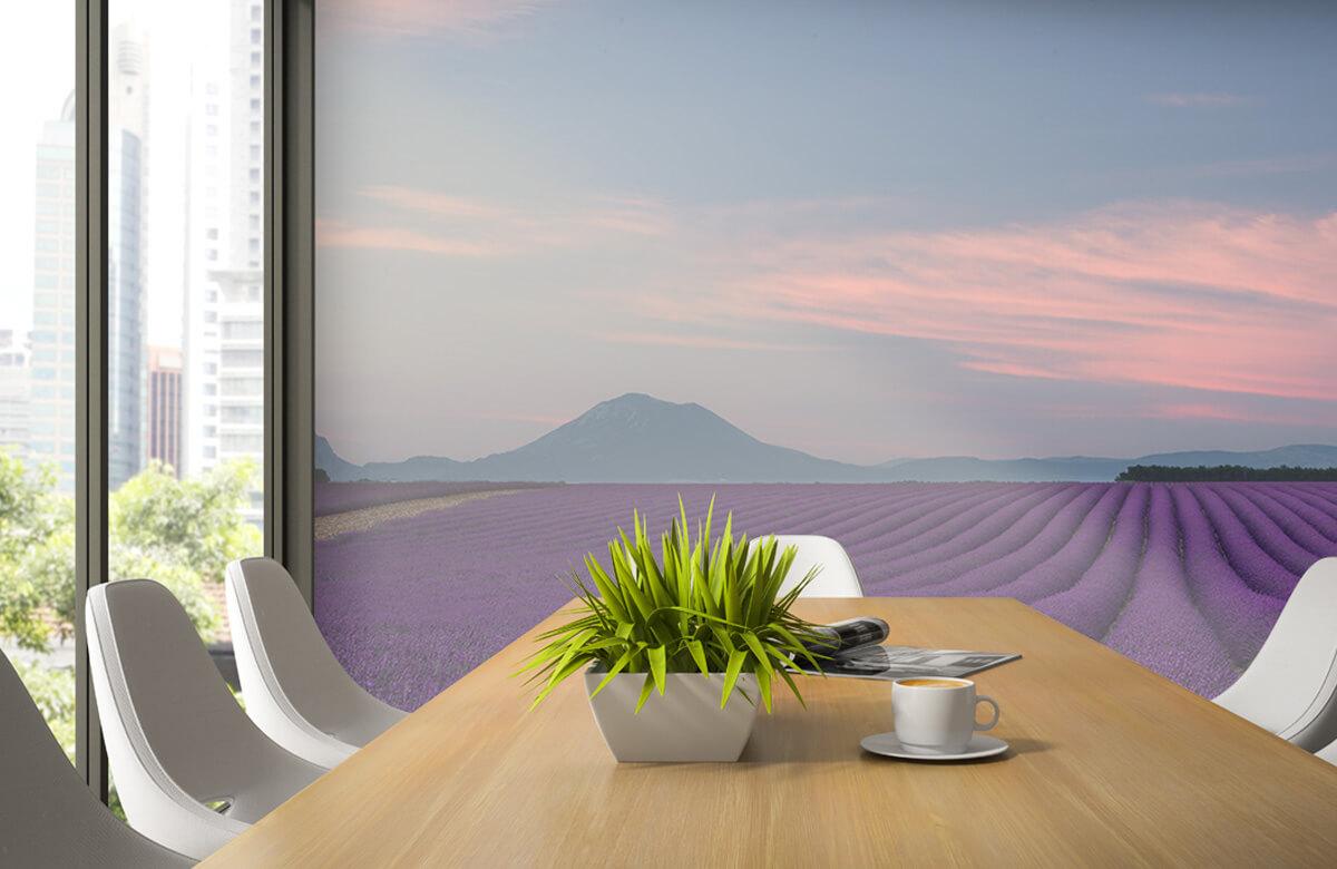Landscape Lavender field 7