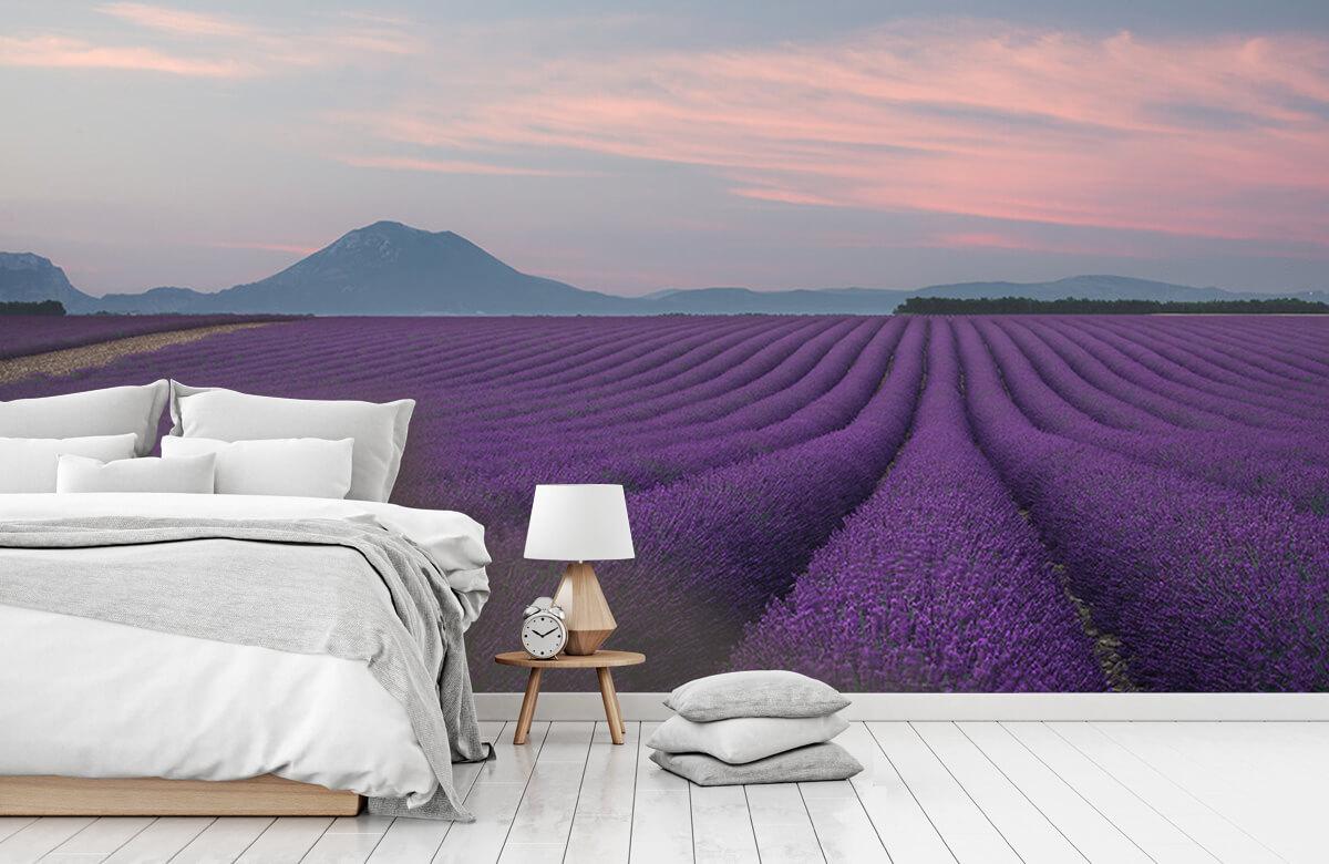 Landscape Lavender field 6