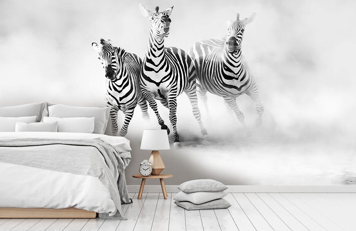 Wilde dieren Zebras 10