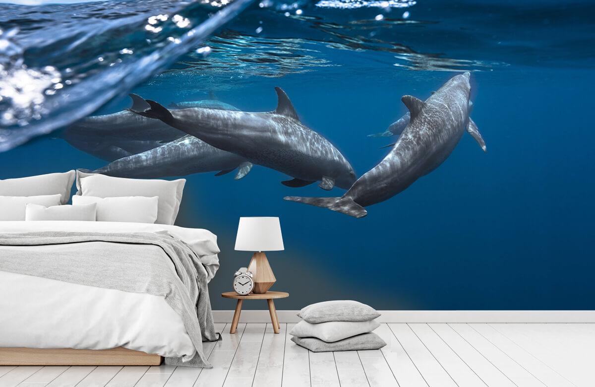 Underwater Dolphins 8