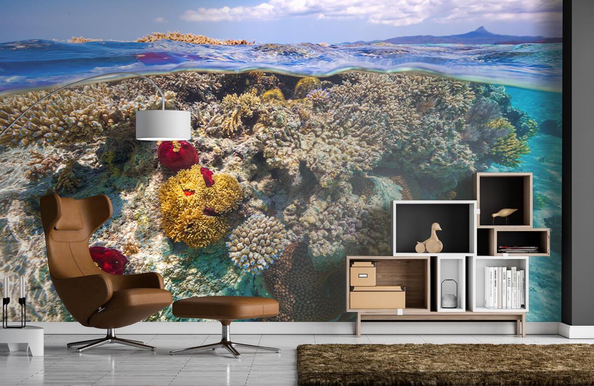 Underwater Mayotte : The Reef 2