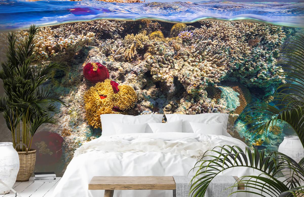 Underwater Mayotte : The Reef 7