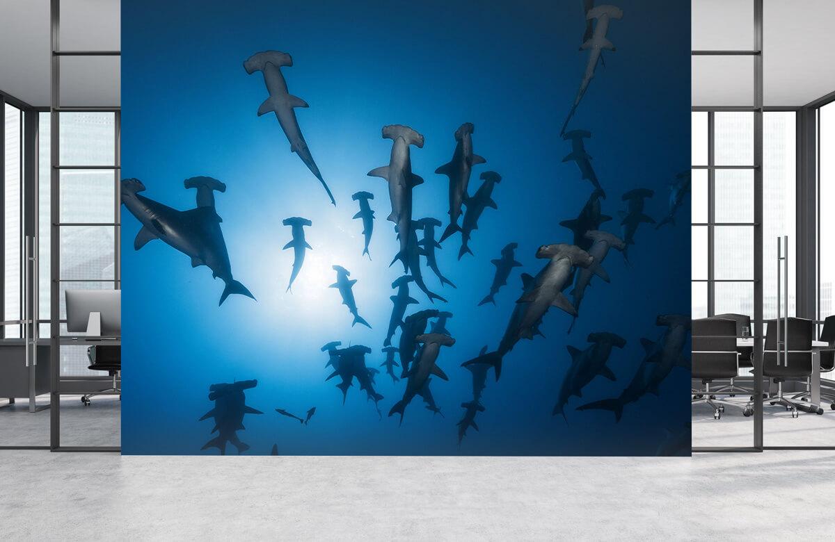 Underwater Hammerhead Shark - Underwater Photography 7