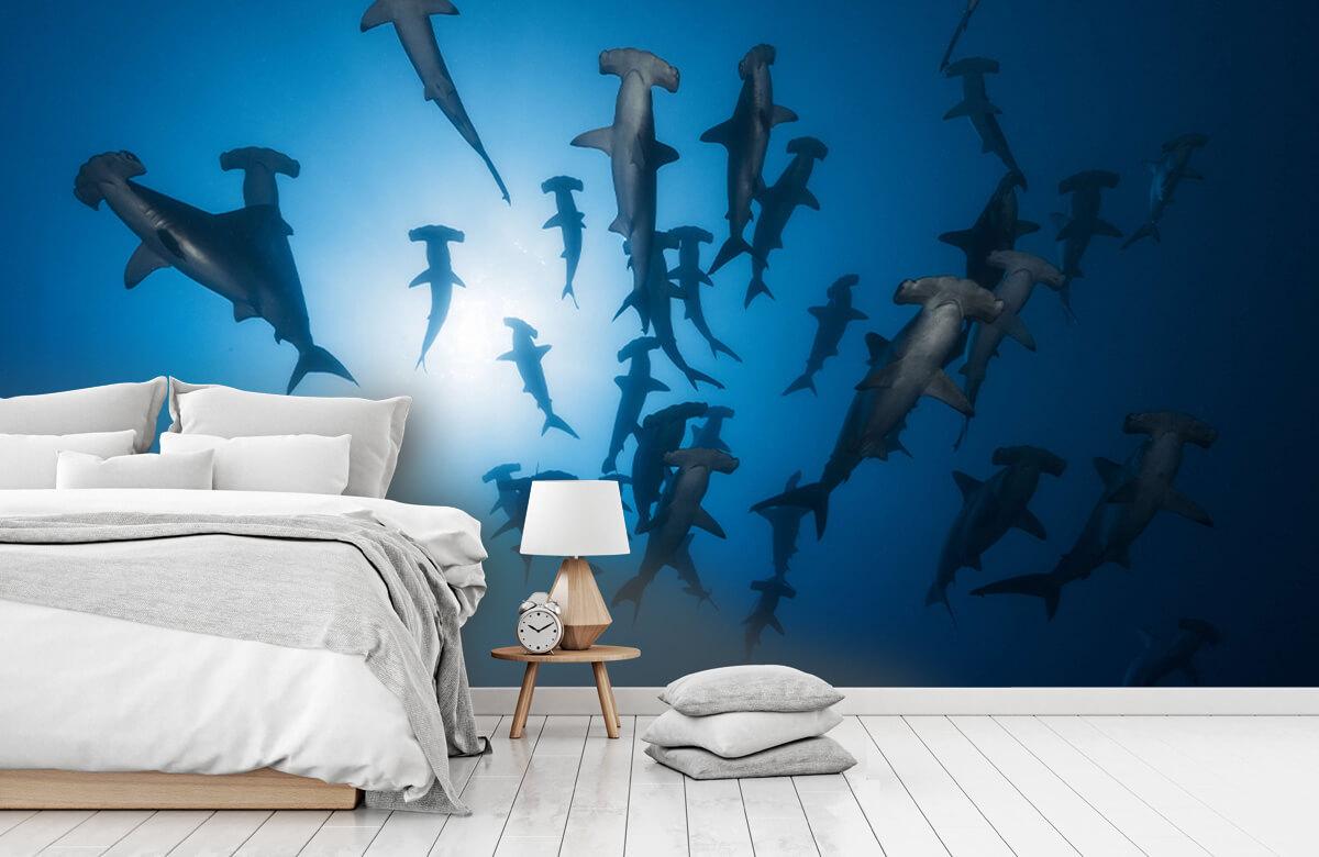 Underwater Hammerhead Shark - Underwater Photography 5