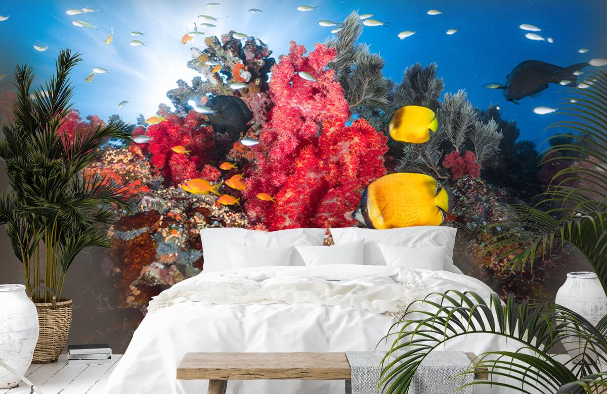 Underwater Reef life 3
