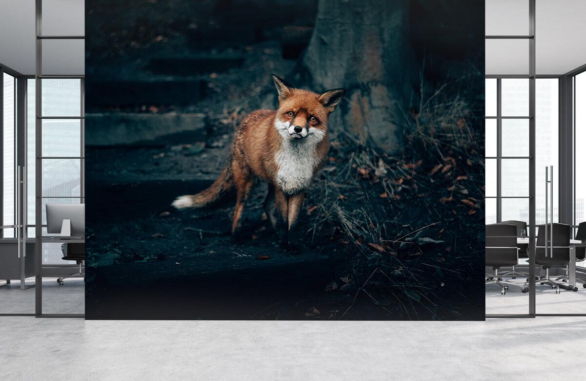 Wallpaper Un renard curieux 8