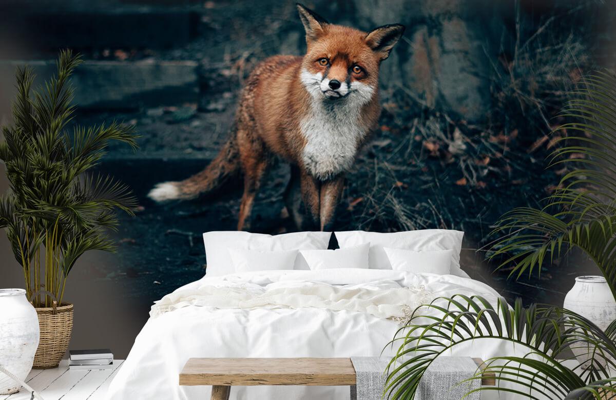 Wallpaper Un renard curieux 7