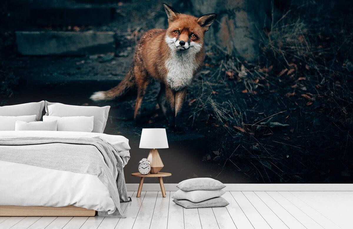 Wallpaper Un renard curieux 9