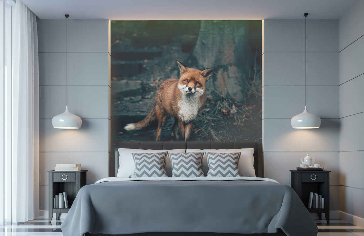 Wallpaper Un renard curieux 11