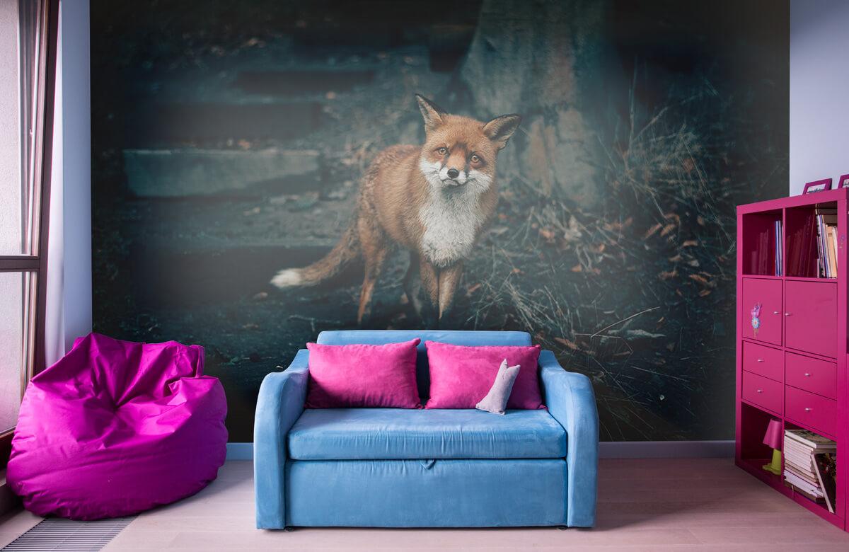 Wallpaper Un renard curieux 3