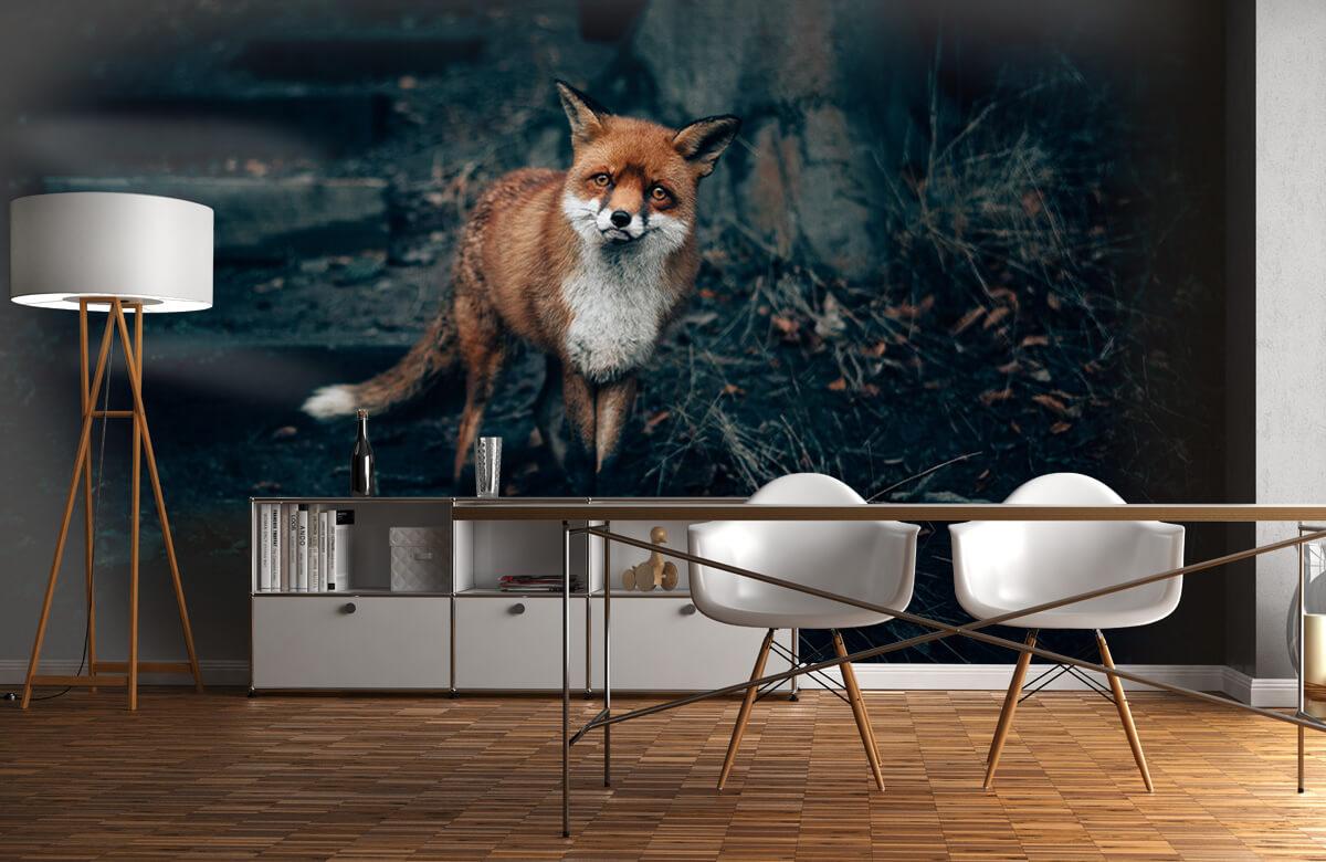 Wallpaper Un renard curieux 2